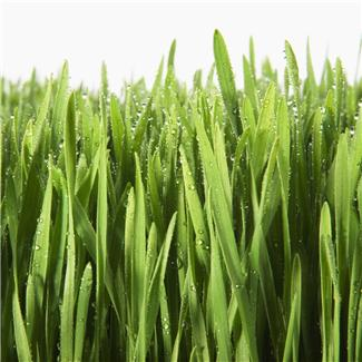 close up of blades of grass